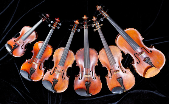 family of different sized violins on black